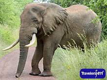 Click here to visit the Travelers411 Directory for Augustine Tours of Rwanda