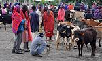 Maasai cattle market