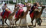 Virginia City's International Camel Races started as a hoax when the Territorial Enterprise published an article about racing camels down the street....