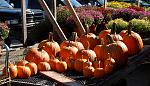 Pumpkin Picking is taken very seriously in Westchester County during the fall season. Come prepared, and ready to carry a huge pumpkin back home for...