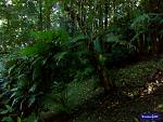 Dense jungle at Belcampo Lodge and Farms resort in PG, Belize.