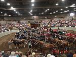 Draft Horse Hitches Show