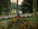 Maureen O'Hara in The Quiet Man herding sheep