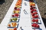 Heirloom tomato tasting.  This year we are growing 64 varieties of tomatoes.