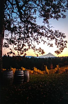 Phelps Creek Vineyard dusk by Sara Heinrichs