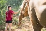 Elephants, Treks, and Temples Tour- Thailand  https://wildwomenexpeditions.com/trips/thailand-elephants/