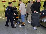 A CBP canine team searches for prohibited meat and agricultural items brought in by arriving air passengers.
