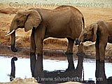 Tsavo East National Park, Kenya.  Photo copyright www.silverbirdtravel.com
