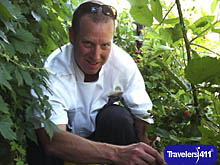 Chef Littman picking blackberries at the JW Marriott San Antonio Hill Country Resort and Spa