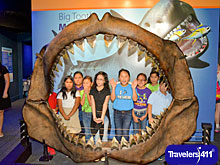 New Saving Sharks exhibit - Megalodon Jaw at the Texas State Aquarium