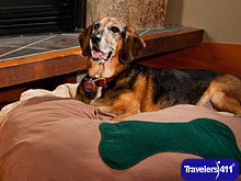 Willows Lodge takes special care of your dogs with WVIP service.