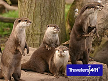 Otter exhibit at Dingle Oceanworld Mara Beo