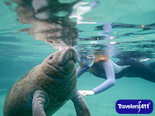 Swim with the West Indian Maanatees at Plantation on Crystal River Adventure Center & Dive Shop.